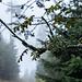 """Neuer Wasserfall-Erkundungs-Anlauf Ende September, nach regenreichen Tagen. Diesmal auf den """"einfachen"""" Forstwegen auf kürzerer Route."""