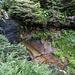 ... und werfe auch hier eine neugierigen Blick auf Spuren des Wassers im Buntsandstein-Fels (der seinem Namen offenbar alle Ehre macht).