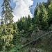 Zurück geht es über einen aufgelassenen Wirtschaftsweg, der bis auf ca. 50 Meter an den Wasserfall heranreicht. Hinten türmt sich ein dicke Cumulus auf.