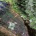 """Links am Wasserfall kann man sich durch die Wildnis hocharbeiten und einen Blick auf die schön ausgewaschenen """"Fallbahnen"""" des Wassers werfen: geformt fast wie eine Sprungschanze."""