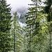 Zwischen den herbstgefärbten Bäumen immer mal ein nebeldurchsetzter Blick ins Tal des Ilgenbachs.