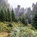 Hier hört der aufgelassene Forstweg endgültig auf und es geht wieder durch den Farn.