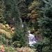 Erst ging es zum Wasserfall, seine Umgebung hat sich zwischenzeitlich kräftiger herbstlich eingefärbt.  Diesmal hört ich sein Rauschen noch viel früher als im September. Es war fast schon ein krachiges Donnern.