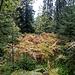 Herbstfarben auch hier. Ein Lichtblick im ansonsten dichten, äh, Dickicht.