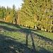 Großen Schrittes unterwegs in den ersten Sonnenstrahle auf der Lauftegg