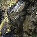 viel Wasser tropft von den Felsen