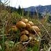 Funghi a novembre