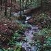 Im Spalenwald überquerte ich den Cholersbach. Von nun an ging es nach kurzem Abstieg vom Spaleneggli wieder bergauf.