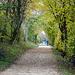 Weg entlang des Kanals, mit den Herbstfarben besonders schön