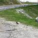 Bei der Rückfahrt haben wir auf dem Sustenpass noch ein Murmeli getroffen