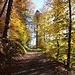 """""""Bunt sind schon die Wälder... """" der Weg von Malans nach Seewis ist dem Dichter und Politiker G. von Salis-Seewis gewidmet, der dieses Lied erfunden hat, in Seewis geboren und in Malans gestorben ist."""