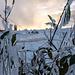 Auch die ersten Frostfahnen sind auf der Vegetation zu finden.
