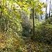 Durch den bunten Blätterwald