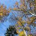 Immer wieder erfreun wir uns an den kräftig-prächtigen Farben des Herbstes.