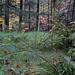 Das Waldgras schaut verführerisch weich aus und animierte den Kamera-Ritter kurz zum Rasten, aber dafür ist es leider zu feucht.