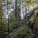 Die Frœnsbourg schimmert durch den Wald.