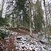 """Im Waldaufstieg von der Oberen Stuhlsebene zum Belchenhaus, zum Schluss über den """"Steilen Pfad"""""""