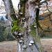Viel Pilze am Baum