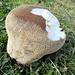 Ein schöner Pilz. Ich habe aber nicht reingebissen...