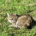 Mietzi nimmt ein Sonnenbad