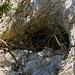 Blick im Zoom zum Eingang der schierig errieichbaren Unteren Vogelbergöhle.<br /><br />Da das die Zeit fortgeschritten war folgte ich nicht mehr weiter der zugewucherten Felswand um die Mittlere Vogelberghöhle zu suchen, sondern stieg hinunter auf die Weiden im Bogental.