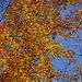 Herbstwald 3 - mit Laubsymphonie