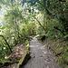 Weg zum Wasserfall, Nr. 3 - dem berühmten Pailon del Diablo