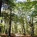 Hier geht es ein paar Meter durch den Wald.