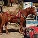man kann auch Pferde mieten, um gewisse Strecken bequemer zu absolvieren (ich werde am Schluss des Treks darauf zurückkommen …)