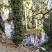 Durch den lichten (Märchen)Wald retour