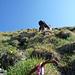 Grasklettern kurz unter dem Gipfelfirst