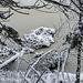An den Ufern des Sees liegen einige umgestürzte Bäume im Wasser. Offenbar hat sie jemand mit Zuckerguß überzogen.
