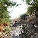 Wadi David: Shulamit spring