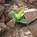 Mount Yishai: germoglio