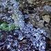Eisperlen im Tösswald