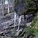 Eiszähne im Tösswald