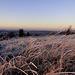 Die Morgensonne beleuchtet das gefrorene Gras