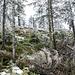 Hier sind wir schon am Nordhang des Hundsrückens angelangt und der Baumbestand wird lichter.