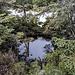Ein kleiner Tümpel im Hochmoor des Hundsrückens.