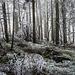 Schon bald danach schleicht sich aber wieder etwas Sonnenlicht in den Wald, hier noch stark vom Nebel gefiltert.