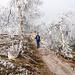 Hier haben wir das Hochplateau erreicht. Geduldige Birken umrahmen eine ungeduldige Wanderin.