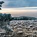 Und Blick nach Westen. Die Sonne scheint langsam Oberhand zu gewinnen. Mittig hinten spiegelt der Rhein auf.
