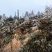 Typischer Westhang im höheren Nordschwarzwald: Heidekraut, Heidelbeeren, Sandsteinblöcke, wind- und schneegebrochene Fichten.