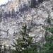 im Rückblick sieht man noch einmal das weiße Band, der Weg, der nach unten führt. In der Vergrößerung sieht man rechts in den Tannen das rote Schild, dass den Zustieg zum Klettersteig markiert.