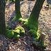 Die Bäume haben wegen der Kälte grüne Socken angezogen.