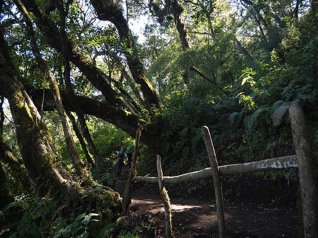 Eine herrliche Waldzone ist zu durchschreiten