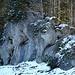 Die Elefanten in der Nagelfluhrippe oberhalb Ramsten