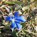 Als mir gerade durch den Kopf ging, dass jetzt nur noch Blumen fehlen, haben wir zwei Frühlingsenziane entdeckt