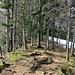 Schöne Waldpassage am Oberchamm