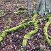 Im Aufstieg zum Lhota - Grüne Füße setzen Trends für die kommende Saison. Ansonsten begeistert der erdige, teils steindurchsetze Untergrund momentan nur mäßig: Es ist rutschig, nachdem der Schnee der vergangenen Tage gerade weggetaut ist.